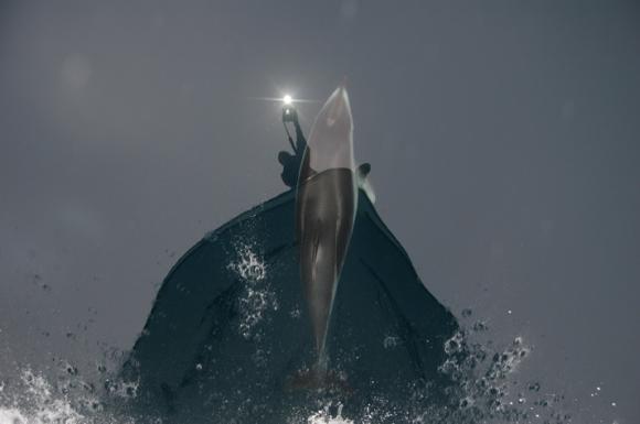 Delfín y fotógrafo