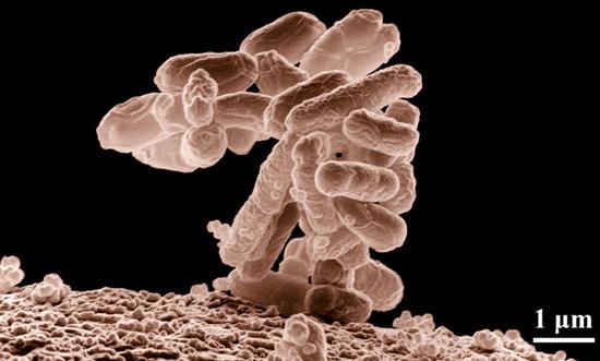 Salvar la vida con un trasplante de bacterias