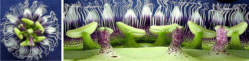 Panorámicas desde el interior de una flor