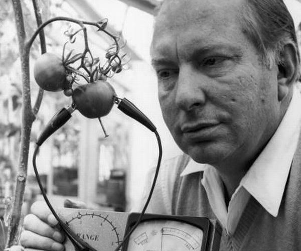 El hombre que susurraba a los tomates