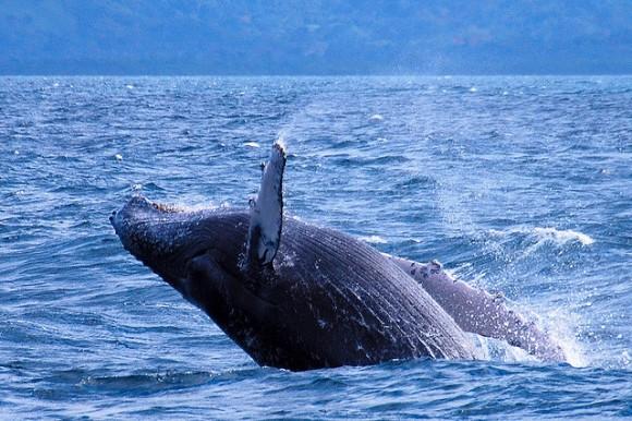 Especies paraguas: una para proteger a todas   Ecología   Naukas