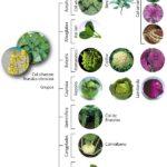 Dios no creó el brócoli