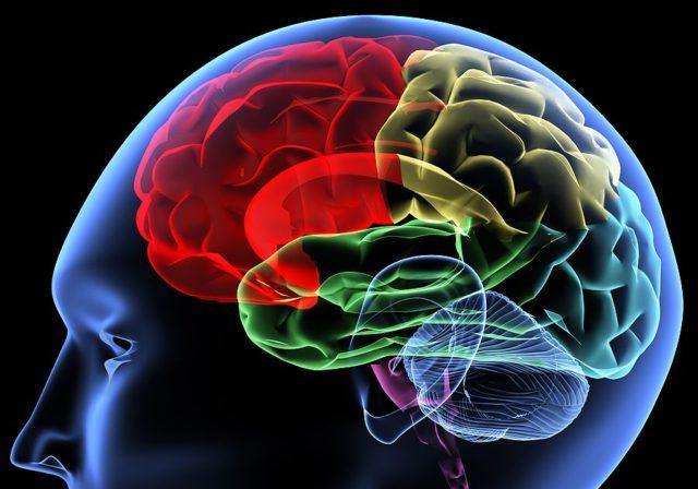 cerebro brain