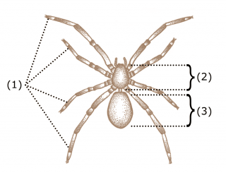 03. Spider-characteristics