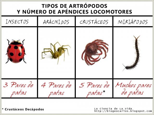 04. tiposartropodos (1)