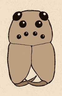 09. Lycosidae_ojos