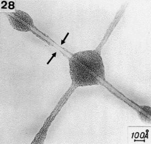 Imagen de nanotubo de carbono obtenida por Oberlin y col. 1976