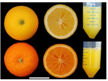 Comparativa del color de la pulpa obtenida con la modificación. [IMAGEN]