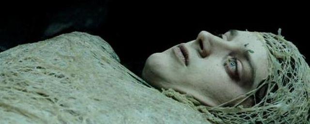Frodo envuelto en telaraña