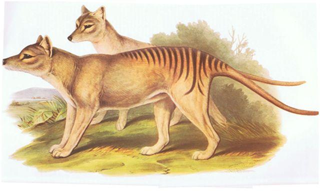 buidelwolf