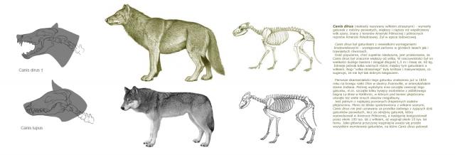 Comparación entre Canis dirus y Canis lupus. Fuente