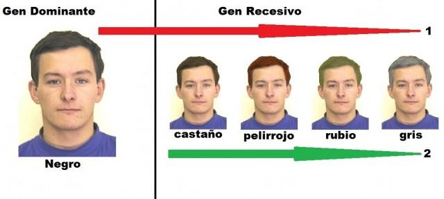 Genética del color del cabello. Fuente