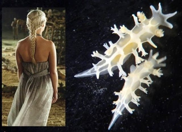 Khaleesi y la babosa Khaleesi. Fuente