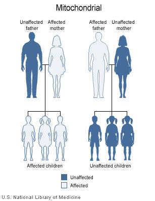 Herencia materna o mitocondrial. Fuente