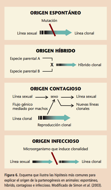 Distintos orígenes de la partenogénesis en animales. Fuente