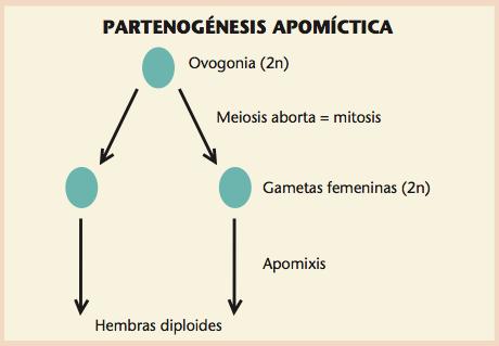 Partenogénesis apomíctica