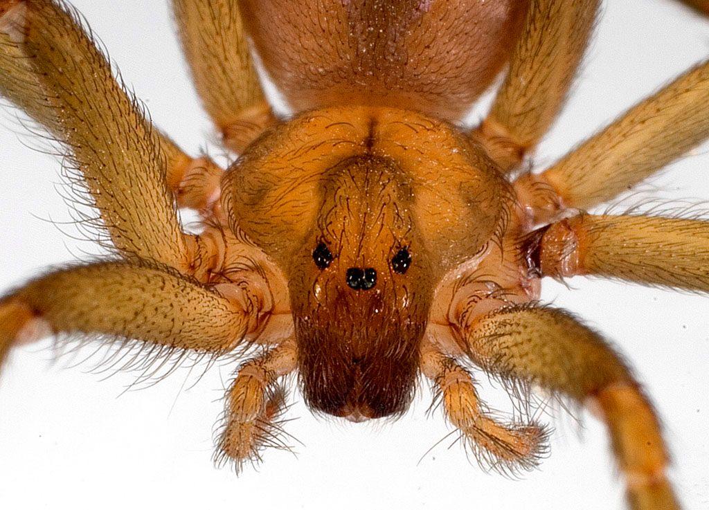 12 Preguntas y respuestas sobre el caso de las arañas reclusas en ...