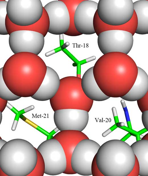 Parte hidrófoba de la proteína AFP colocándose entre los huecos del hielo. Fuente