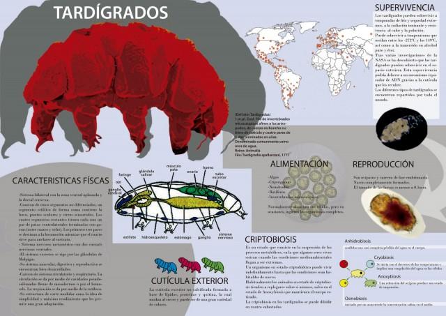Infografía sobre los tardígrados. Fuente