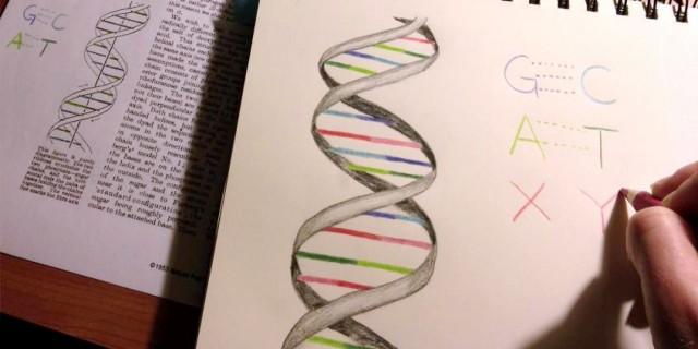 La ampliación del alfabeto del ADN de 4 a 6 letras supone un gran avance en biología sintética, aunque se trata de una copia de la estrategia básica de los seres vivos en el almacenamiento de su información genética [adaptado de Synthorx]