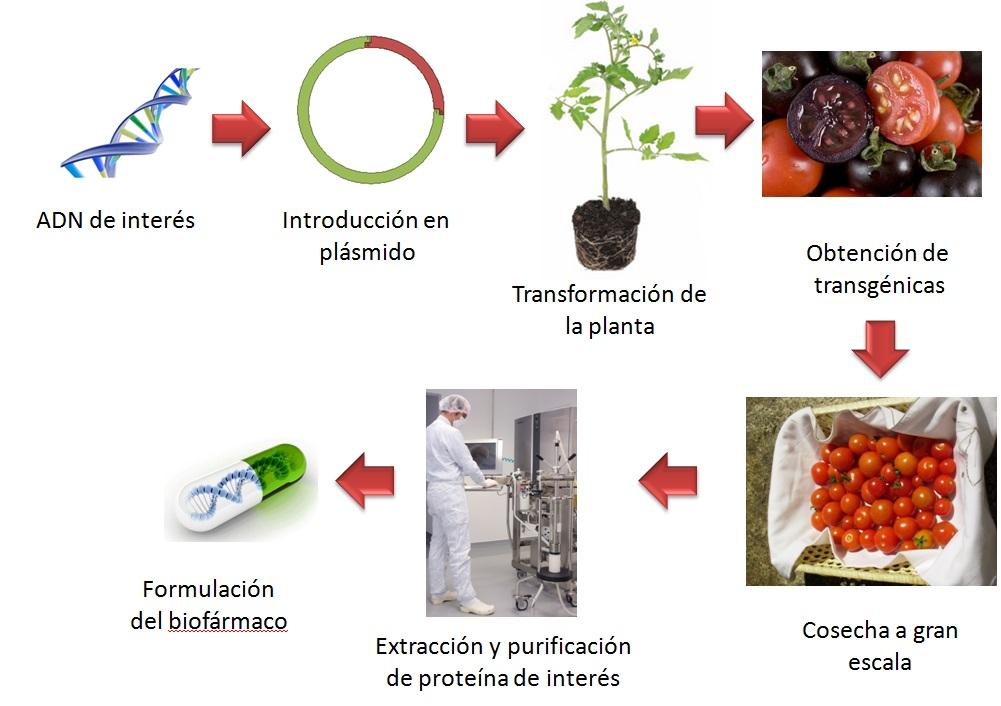 Proceso general de obtención de fármacos mediante la utilización de plantas