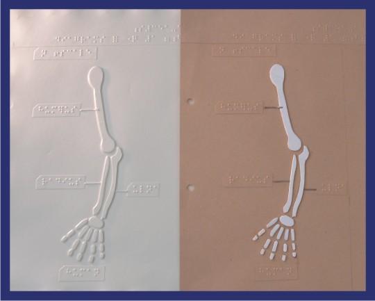 Lámina tactográfica para el aprendizaje de estudiantes ciegos