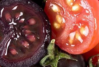 Tomate púrpura: más antocianinas. Sorpresa!...viene cargadito de IgA frente al rotavirus