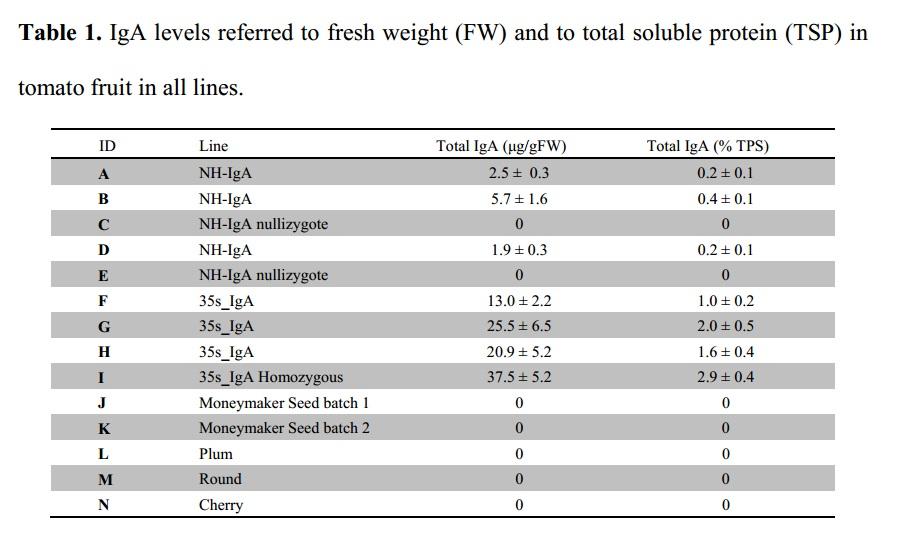 Niveles de IgA por peso fresco y por proteína soluble total en todas las líneas estudiadas. A, B, D, F, G, H, I son transgénicas. C y E son controles no transgénicos, J y K son las líneas parentales silvestres y L, M y N son variedades comerciales de amplio consumo.