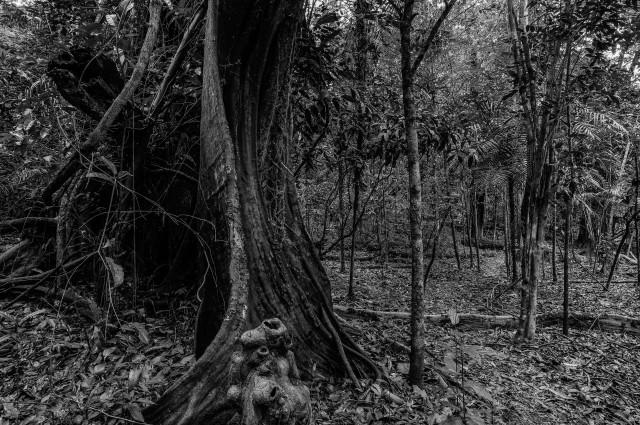 Selva amazónica. Imagen Xurxo Mariño