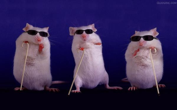 blind mice 1