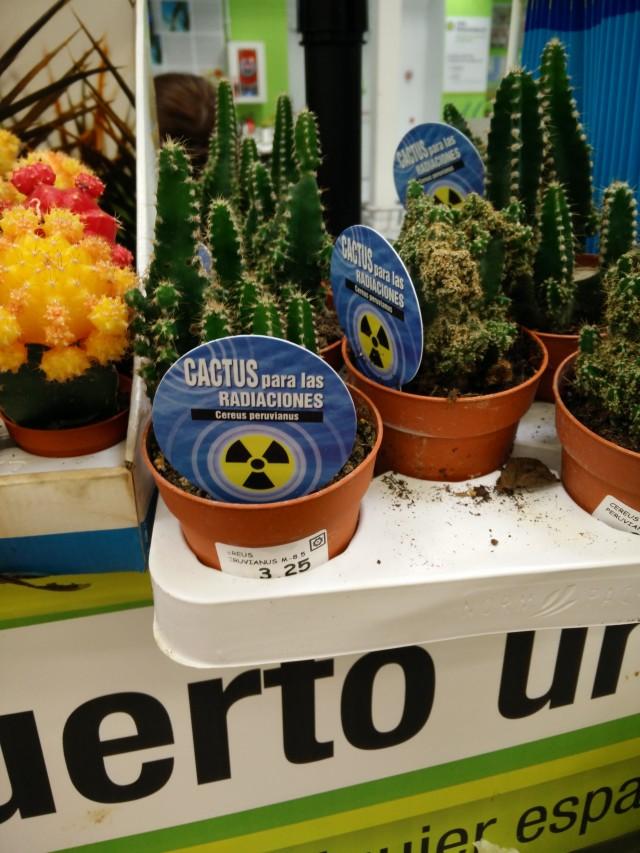 cactus Leroy Merlin