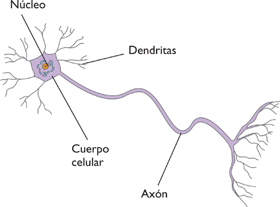 NEURONA1