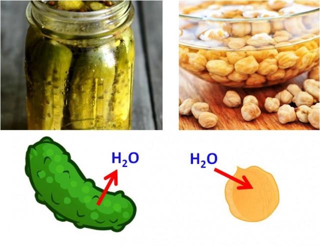 """Ilustración de la ósmosis en la preparación de pepinillos en vinagre y en la hidratación de garbanzos """"en remojo""""."""