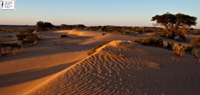 Acacias y dunas