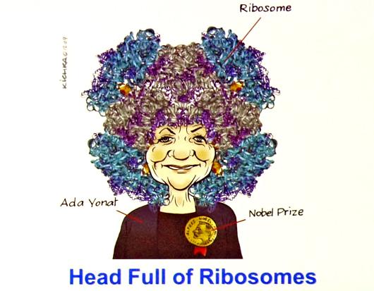 Ada E. Yonath, con su cabeza llena de ribosomas (Autor: Laboratorio de la Prof. Yonath)
