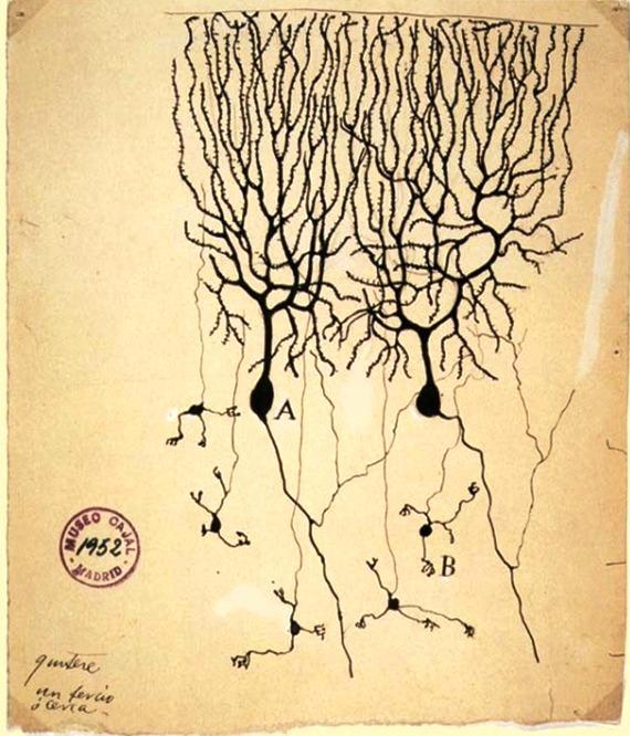 Fig.1 Dibujo de una neurona por Santiago Ramón y Cajal