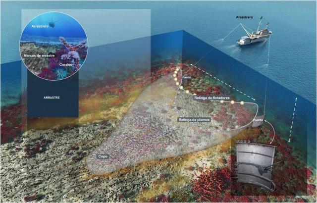 Infografía de la pesca de arrastre por Don Foley.