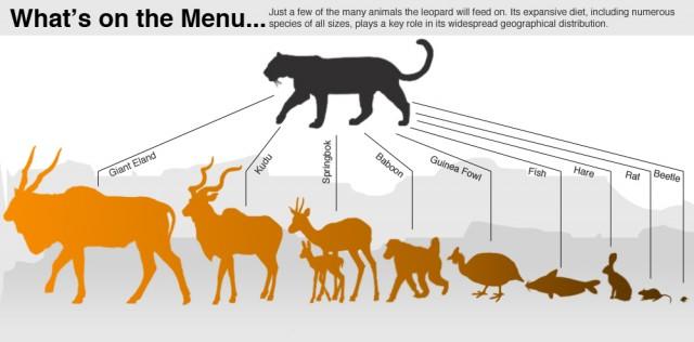 La dieta de los leopardos. Fuente