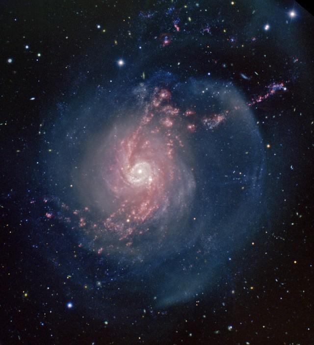 """Toma de la galaxia espiral """"starburst"""" NGC 3310 en la Osa Mayor, a unos 50 millones de años luz de distancia, conseguida con el telescopio de 8 metros Gemini Norte en Hawaii (EE.UU.). Los colores codifican la luz en filtros azules (B, en azul), rojos (R, en verde) y la emisión del gas ionizado (filtro H-alfa, en rojo). Crédito: AAO ITSO Office, Gemini Obs./AURA & T. A. Rector (U. Alaska Anchorage), ligero realce por Ángel R. López-Sánchez."""