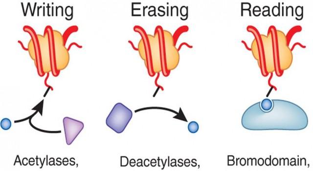 epigenetic effectors