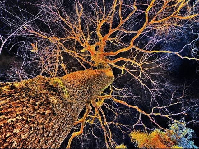 plant-neurobiology-640x480