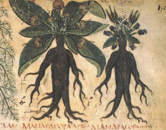 Folio 90 del manuscrito De Materia Medica de Dioscórides. Fuente
