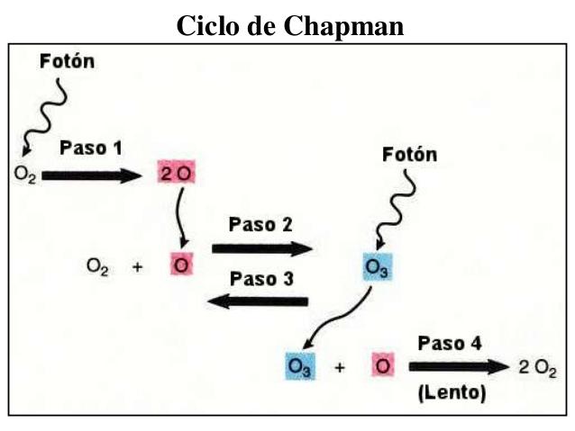 Ciclo de Chapman | Fuente