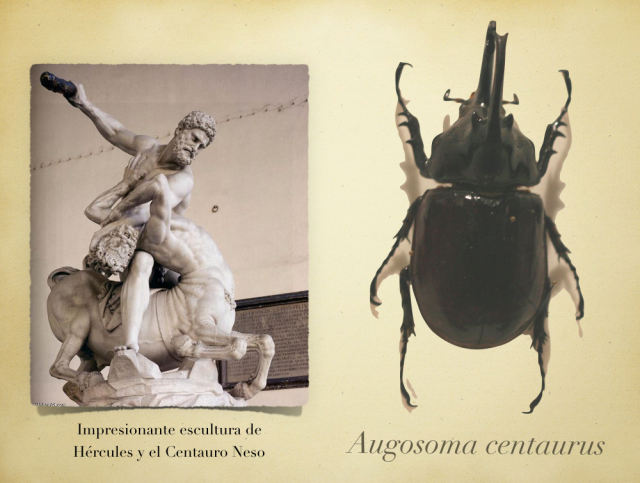 Hércules, el Centauro Neso y Augosoma centaurus