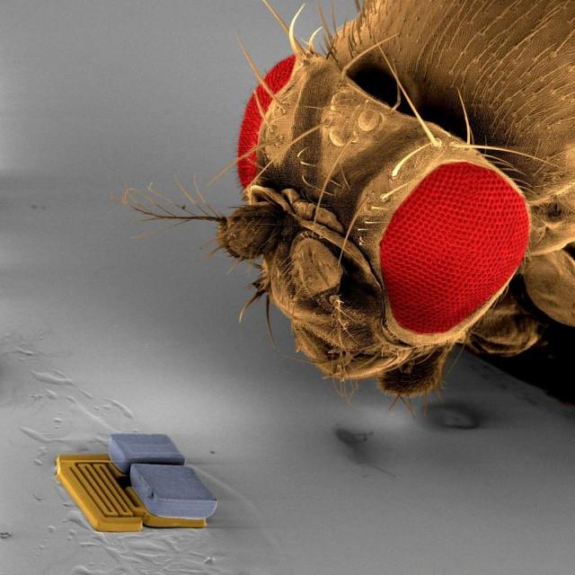 70732633eb_mems-nanotechnologie-nanotechnologies-nano-robocup-nanosoccer_eth_zurich