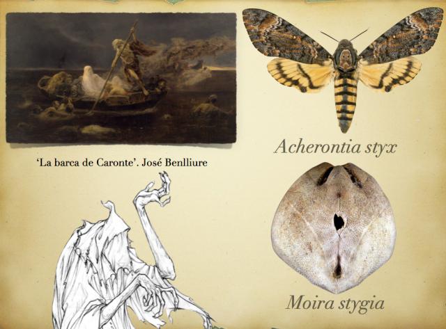 Caronte. Acherontia styx y Moira Stigia