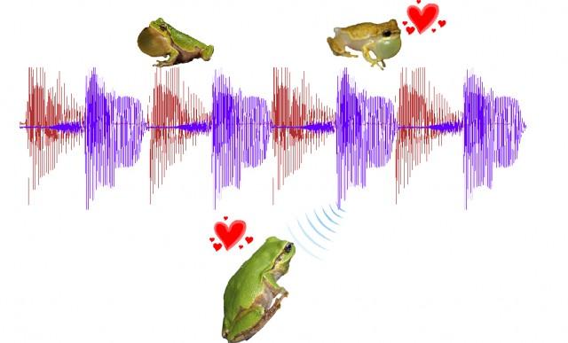 Cantos de rana y planificación de horarios - Naukas