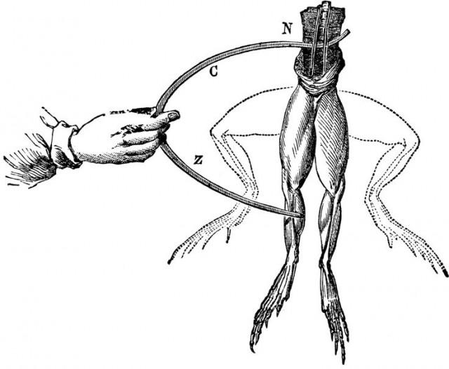Demostración de Luigi Galvani sobre estimulación eléctrica al nervio de una rana