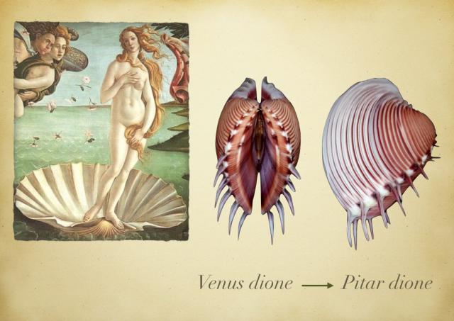 El nacimiento de Venus, de Boticelli y la almeja Pitar Dione
