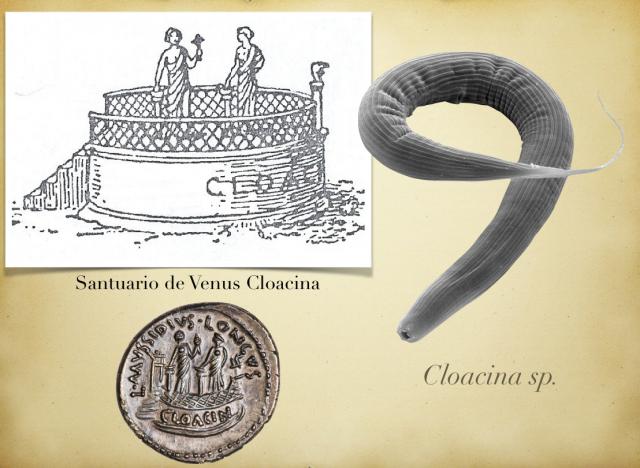 Representación de un Santuario de Venus Cloacina. Moneda en honor a Cloacina. Nematodo del género Cloacina